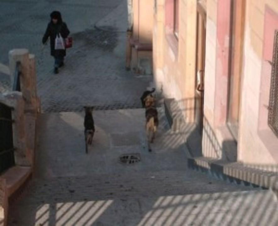 S-a umplut Sibiul de ciini vagabonzi