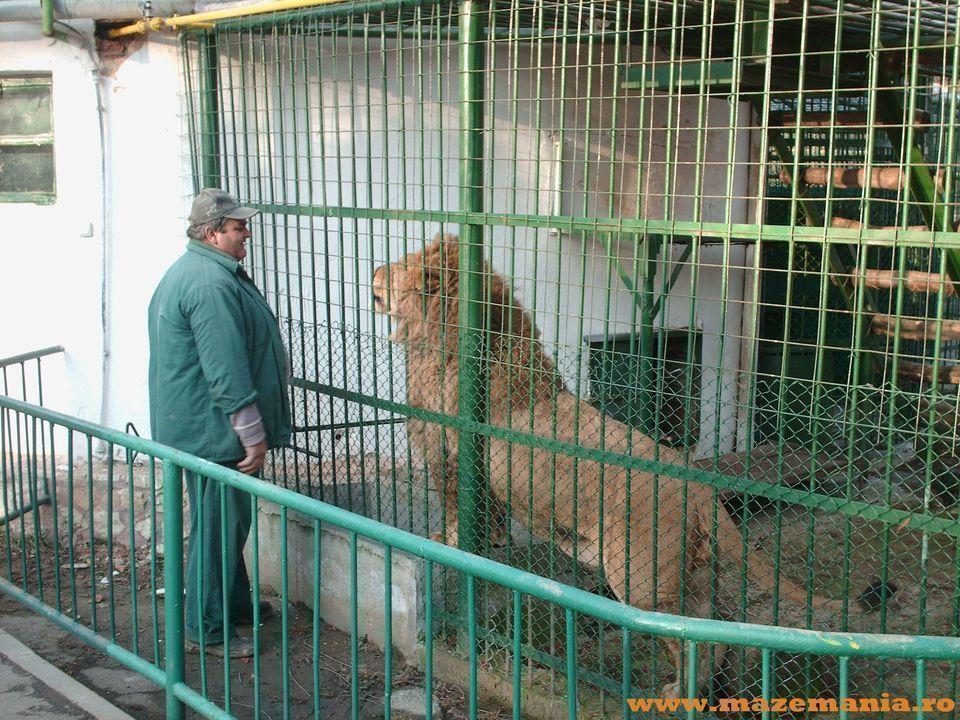 Zoo Sibiu