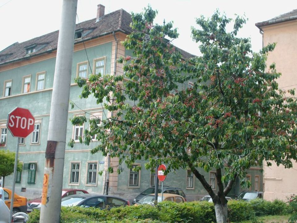 Cires in plin centrul Sibiului