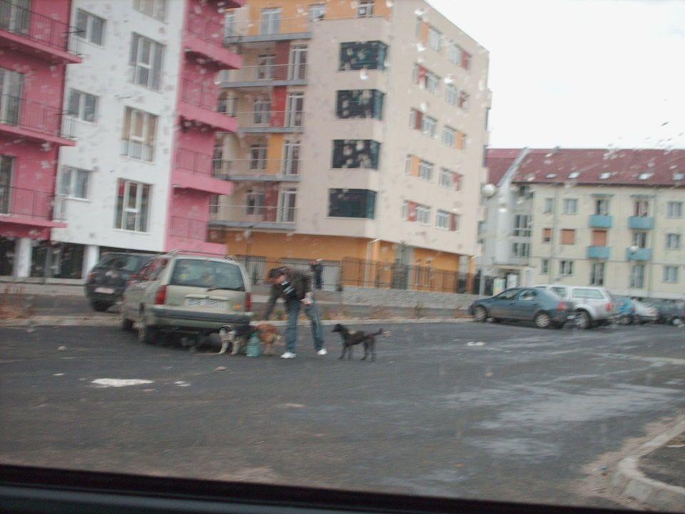 hranitorul de caini in Strand Sibiu
