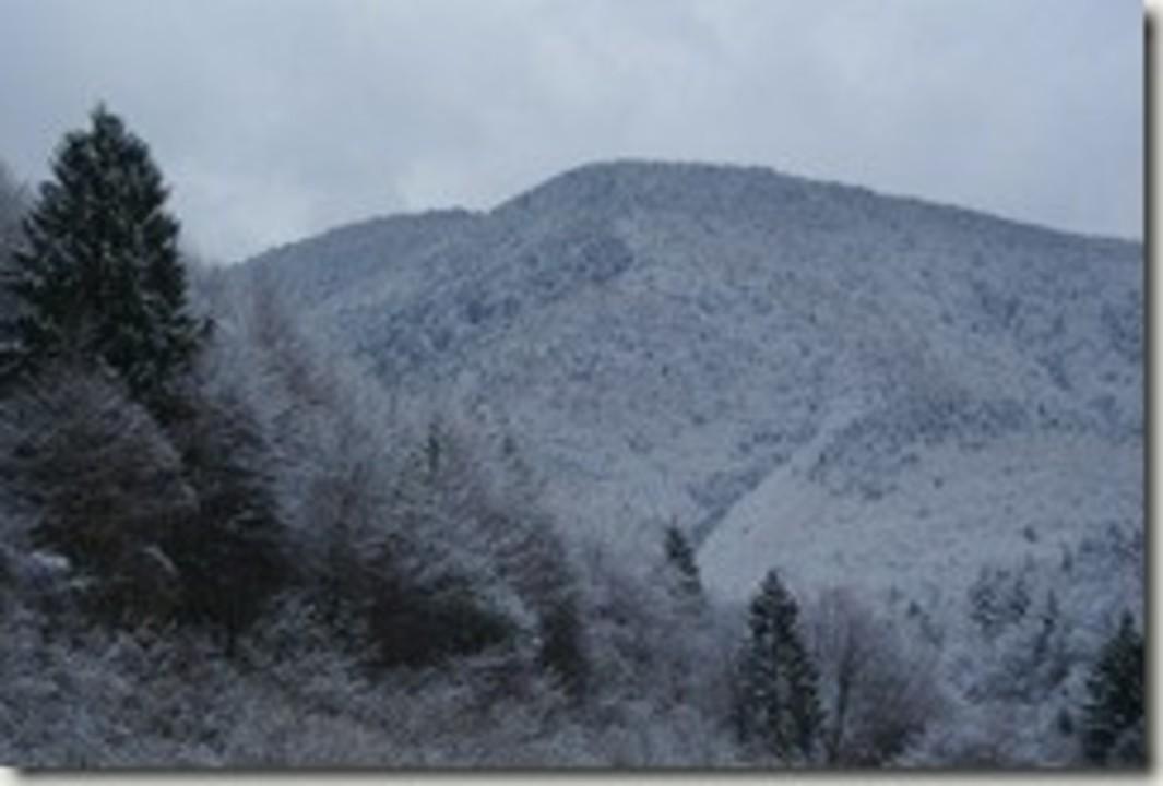 Valea Avrigului iarna