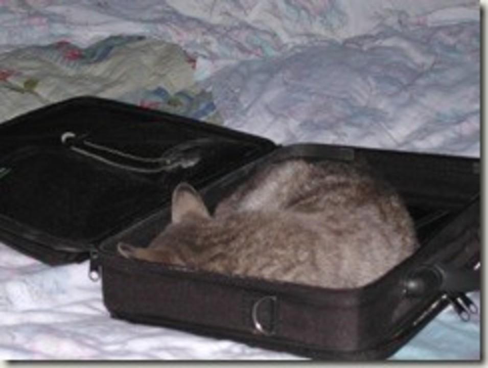 unde dormea Miaunica
