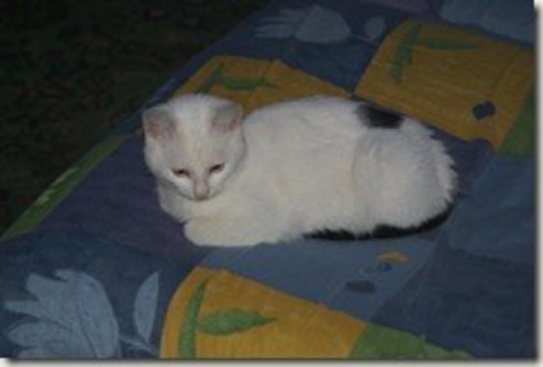 Miaunel