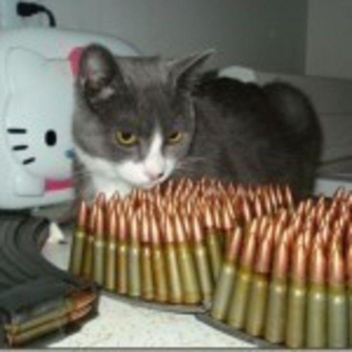 am gasit munitia furata
