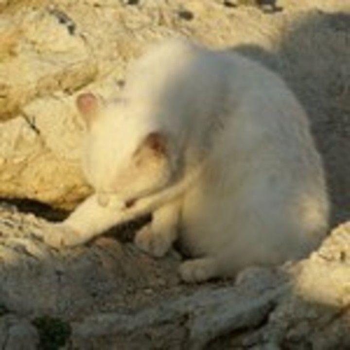 pisici de la Formentor