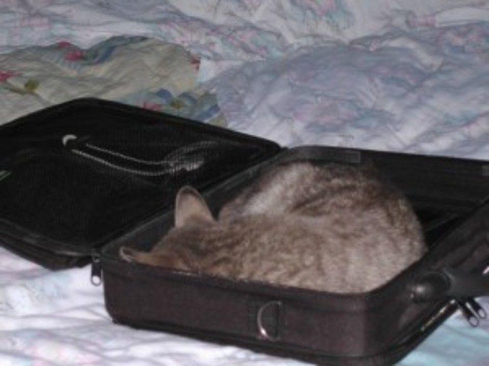 miaunica doarme in geanta de laptop :)