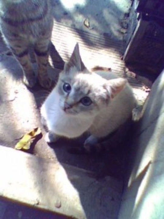 un pisik mic