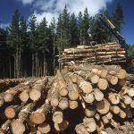 Despre Ponta si mafia lemnului