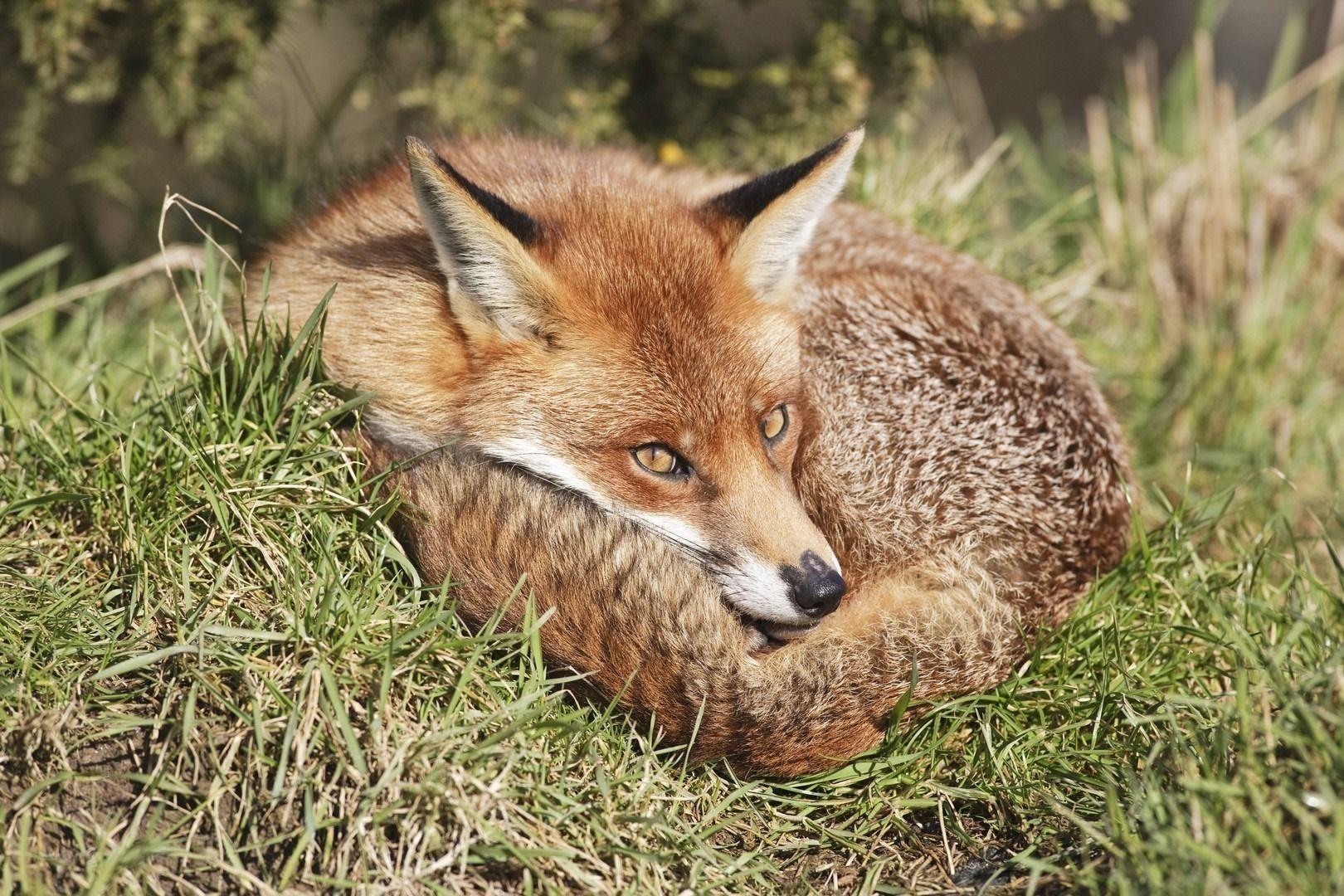 Firefox devine din ce in ce mai irelevant