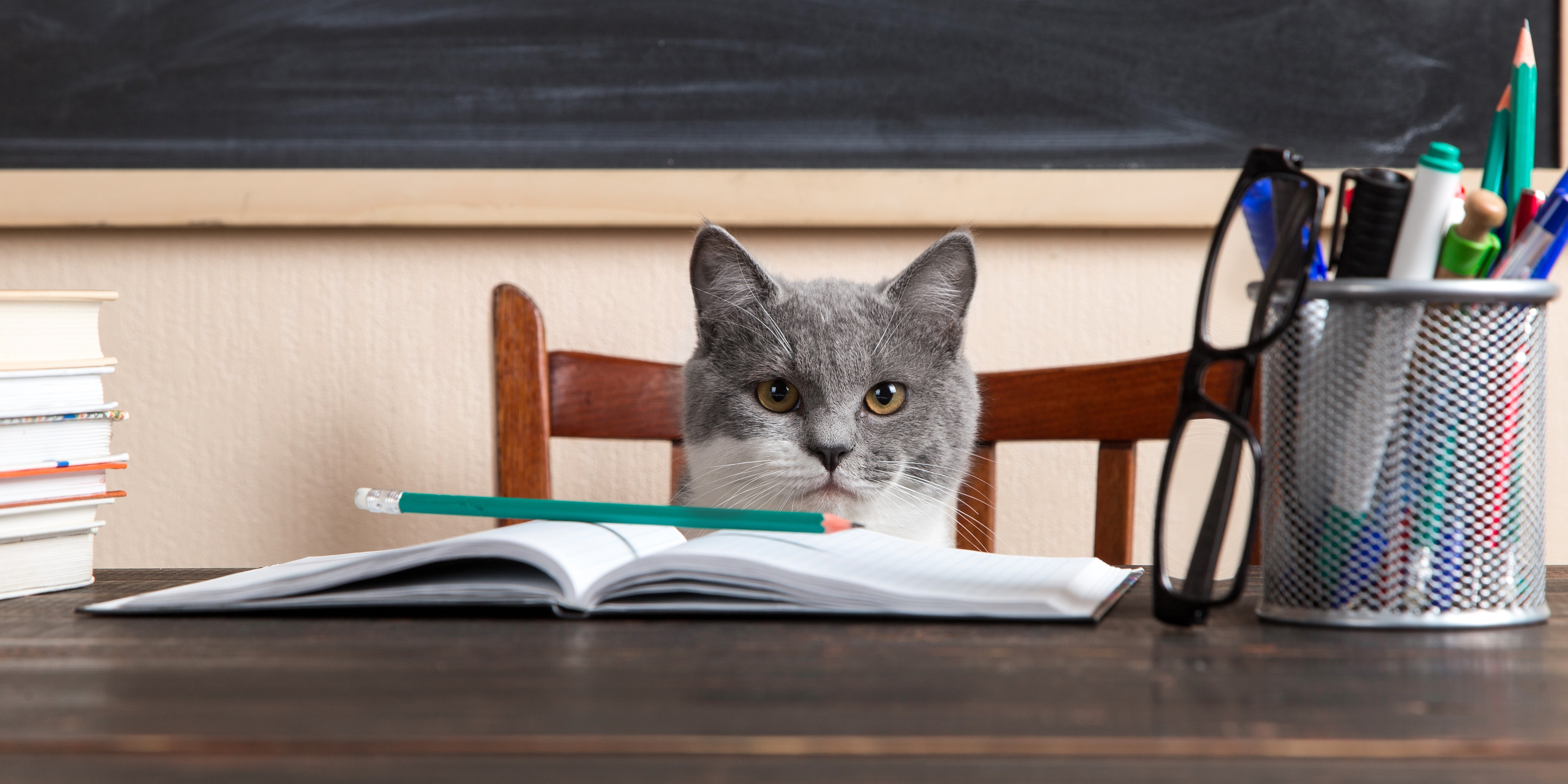 Grey cat sits at a table with books and notebooks, studying at home. Concept for teacher's day, education for pet.